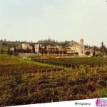 Verona - micpascu
