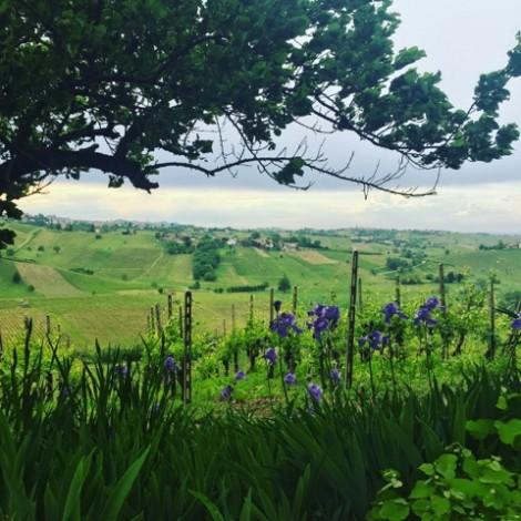 Destinazione Val Tidone: alla scoperta del territorio piacentino