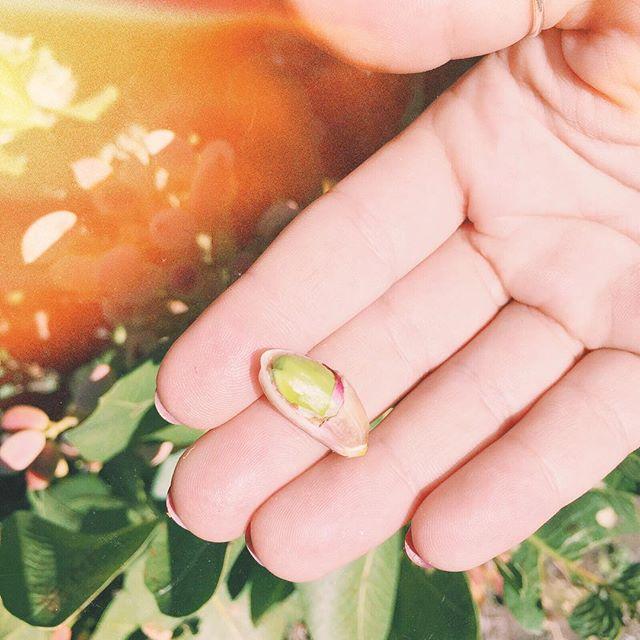 FoodTourSicilia: Instagramers Sicilia racconta le eccellenze del territorio