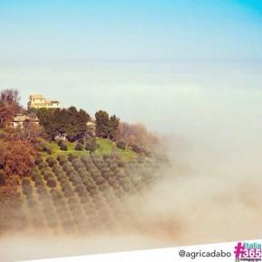 foto scelta per #italia365 - Montecarotto - Ancona - @agricadabo