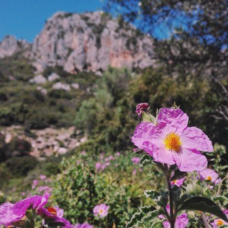 La Rete Sardegna Produce Verde vista con gli occhi di Igers Sardegna