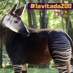 #lavitadazoo Una serata con gli igers al Parco Zoo