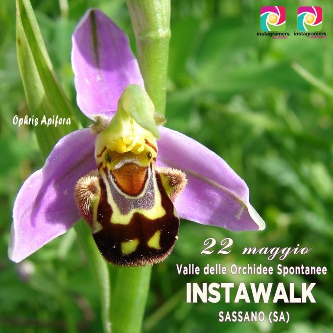 Instameet con igers_Salerno tra le orchidee di Sassano