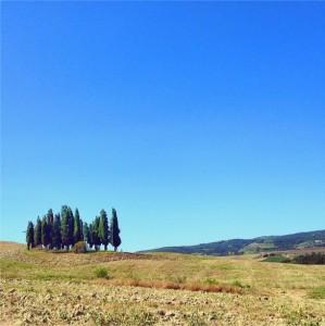Uno dei simboli della Toscana, il boschetto di cipressi lungo la Cassia tra Torrenieri e San Quirico d'Orcia