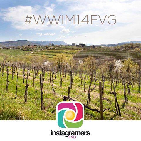 #WWIM14FVG Instameet alla scoperta delle antiche vigne di Ribolla Gialla