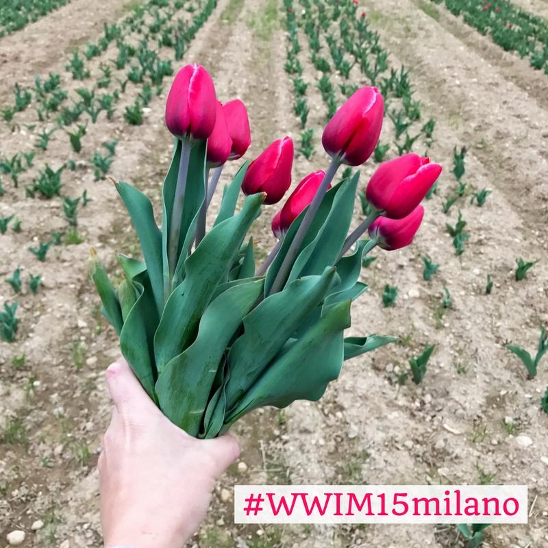 Tulipani italiani instagramers italia for Tulipani italiani