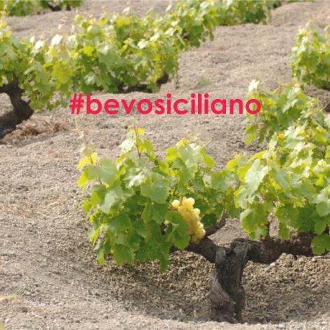 BevoSiciliano: il challenge che promuove una delle terre vinicole più prolifiche d'Italia