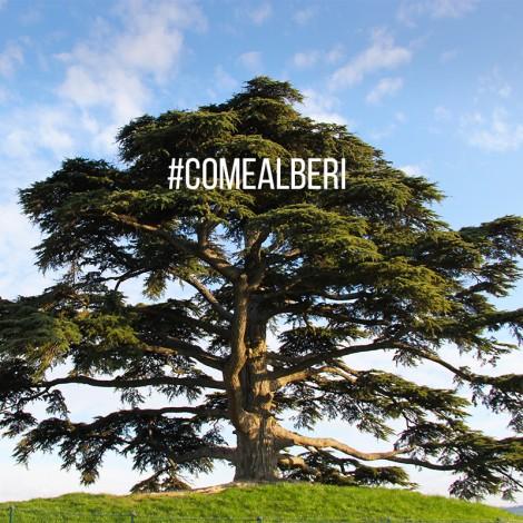 Come Alberi: incontro sotto il cedro secolare nelle Langhe con gli Instagramers
