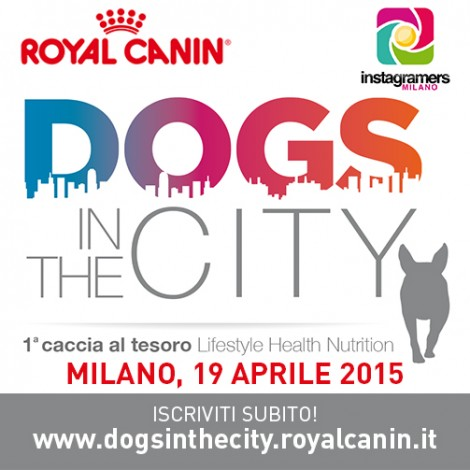 dog-in-the-city