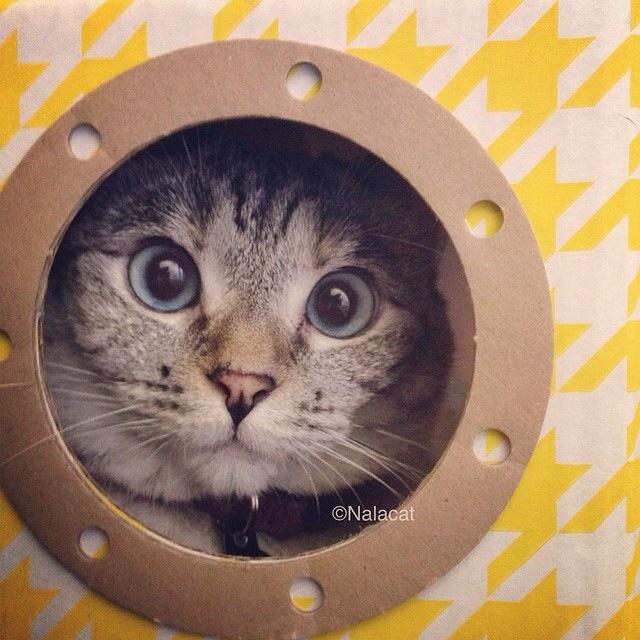 Nala_cat: storia di una gatta fortunata