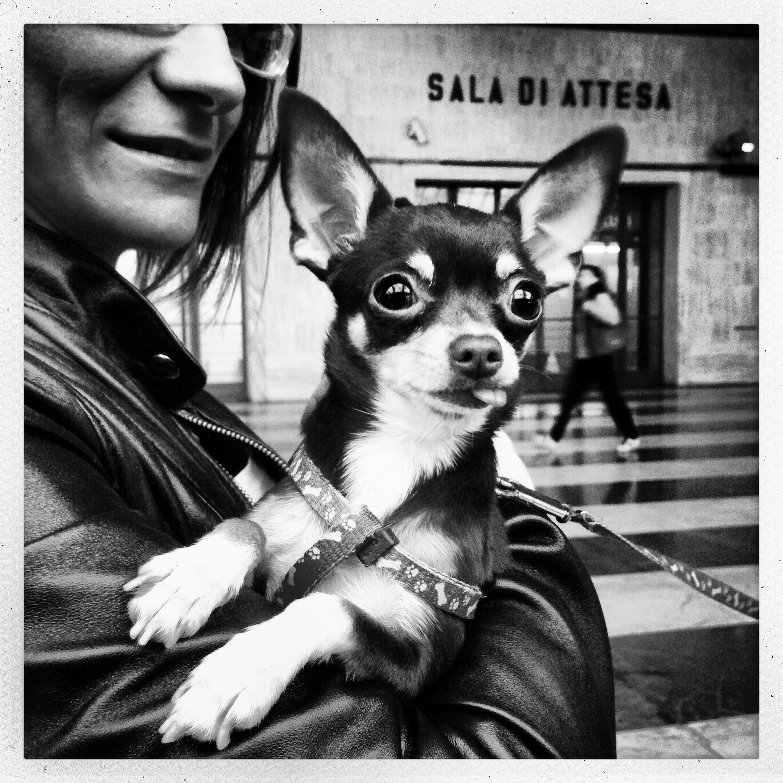 Animali: le vere star di Instagram