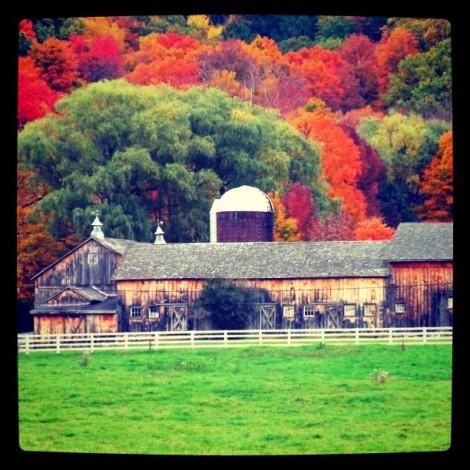 Instagram hashtag creativi: a caccia di colori autunnali con #leafpeeping