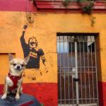 Roma, ph. @miami_traveller_dog