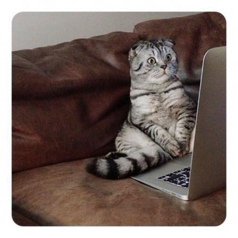 Famous Niki, il gattino russo divo di Instagram