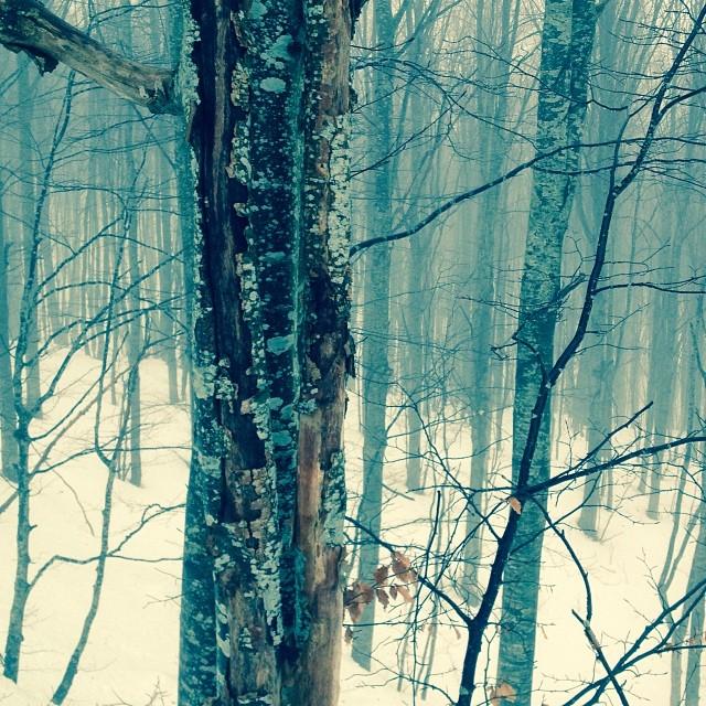 Cerreto Active: fotografare nella neve