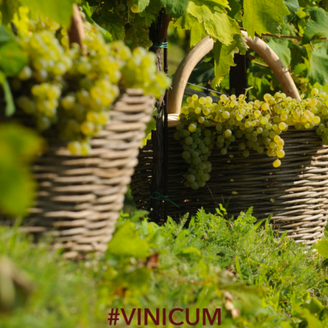 Convenzione Vinicum per Igersitalia Club